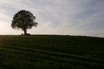 Baum Roh.jpg